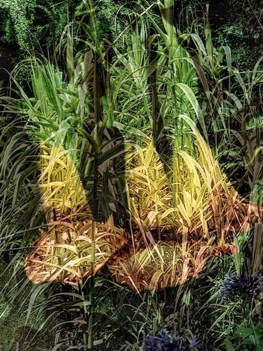 enrico smerilli Plant(s)